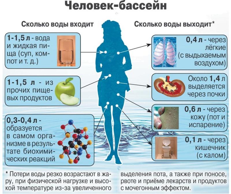 Сколько воды вмещает желудок