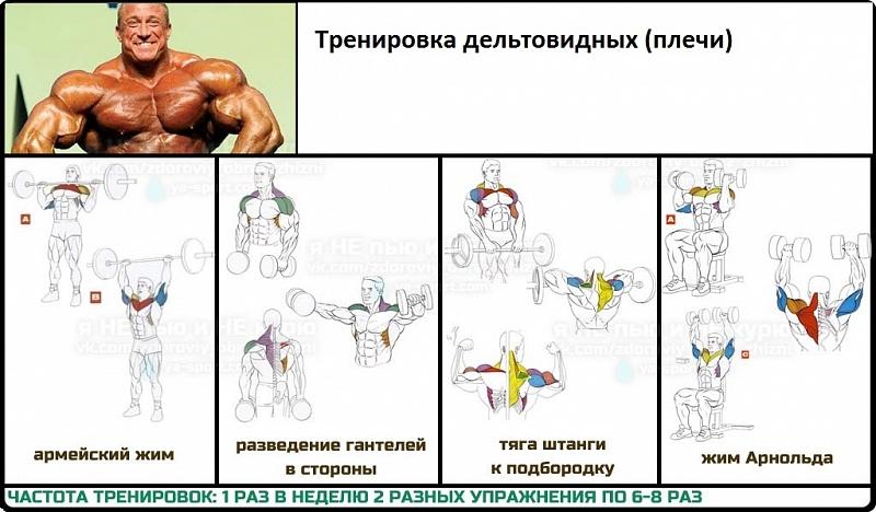 Занятия гантелями в домашних условиях программа тренировок для мужчин